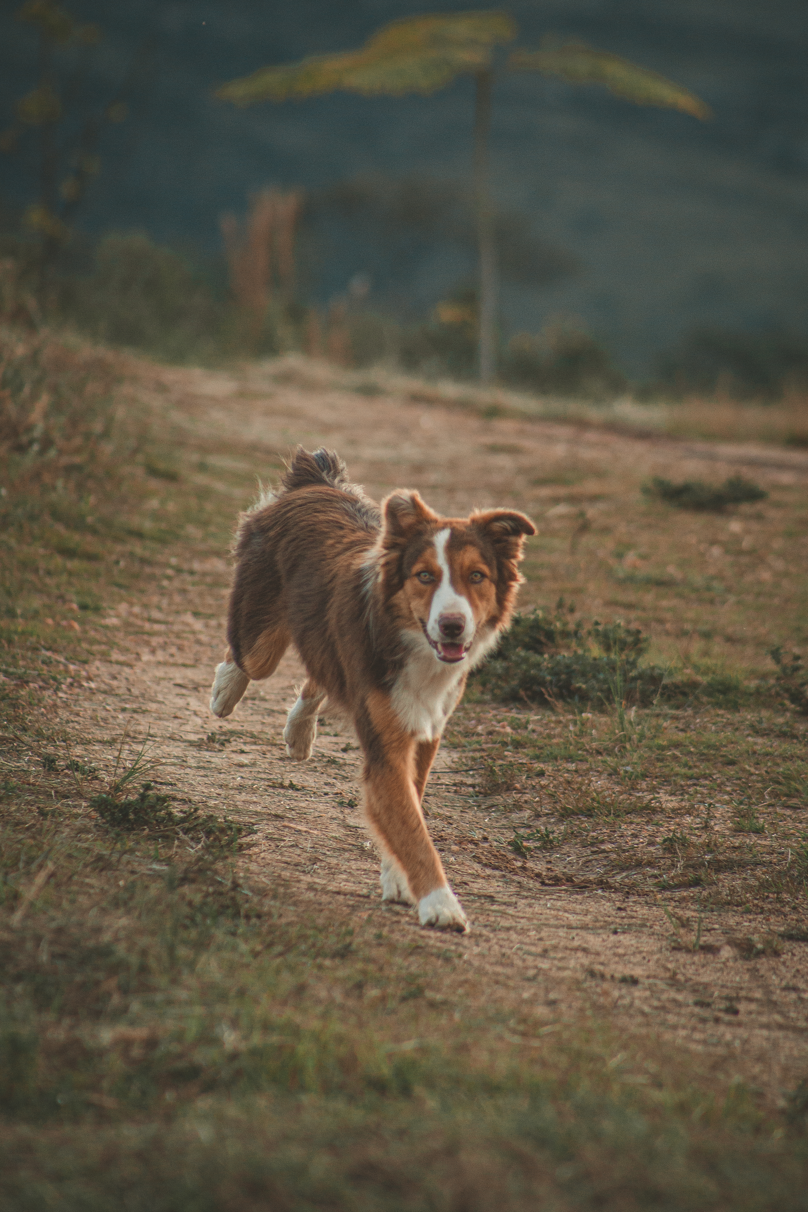Photo of Brown Dog Running Along a Footpath