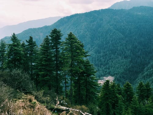 Δωρεάν στοκ φωτογραφιών με αειθαλής, βουνό, δασικός, δέντρα
