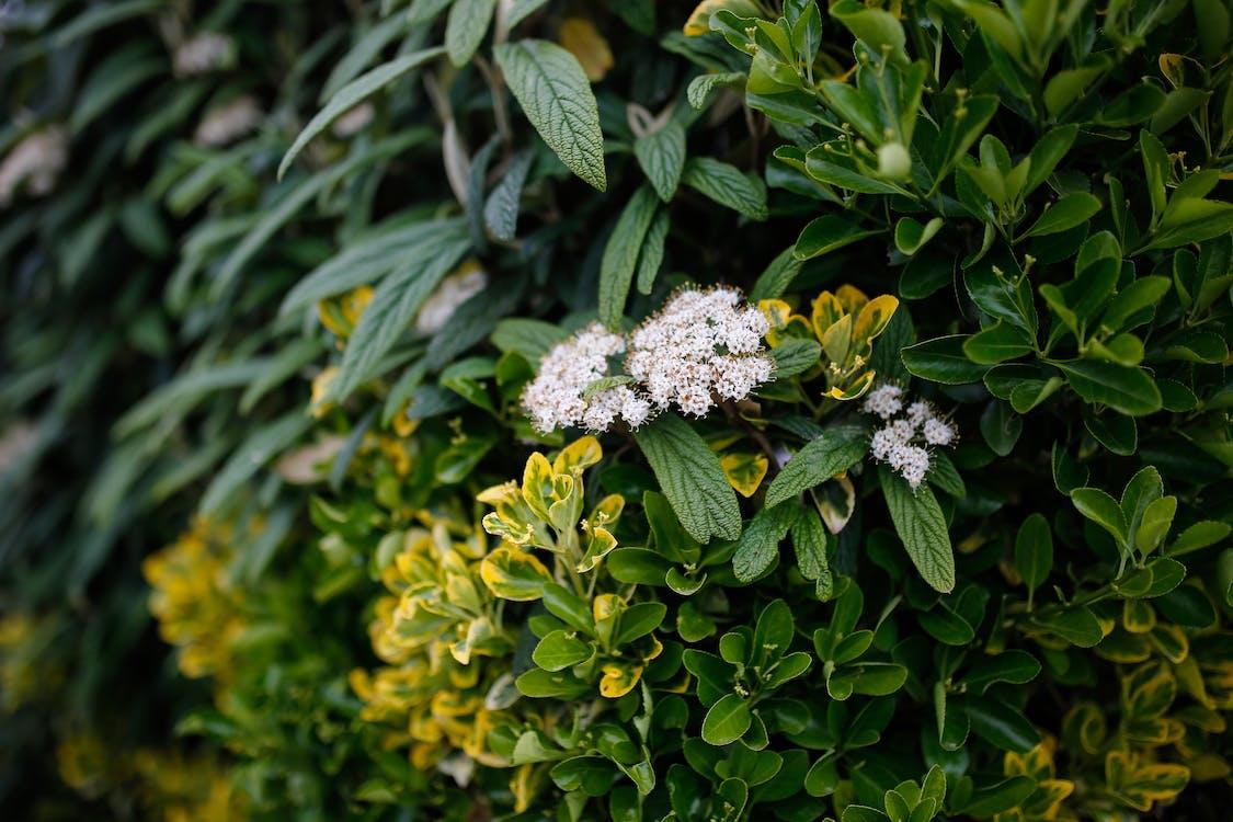 centrales, feuilles, fleurs