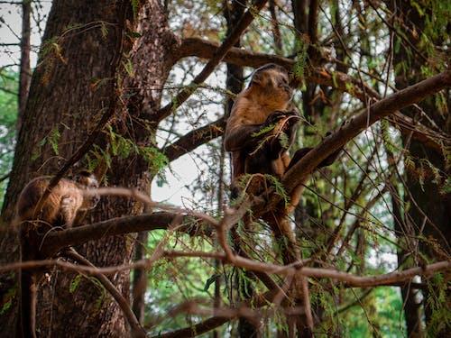 Photos gratuites de animaux, branches, faune, mignon