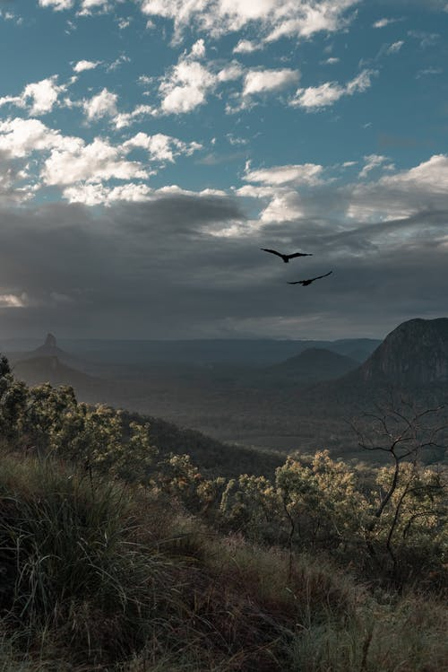 Fotos de stock gratuitas de águilas, Highlands, jungla, madre naturaleza