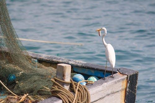 Photos gratuites de bangau, bateau, bornéo, cigogne