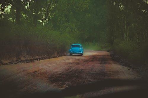 Бесплатное стоковое фото с автомобиль, водить, деревья, дорога