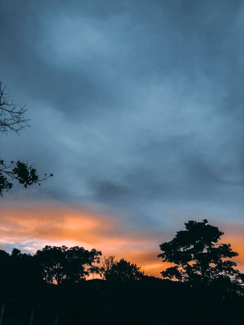 Silhouettes of Trees Under Dramatic Sky