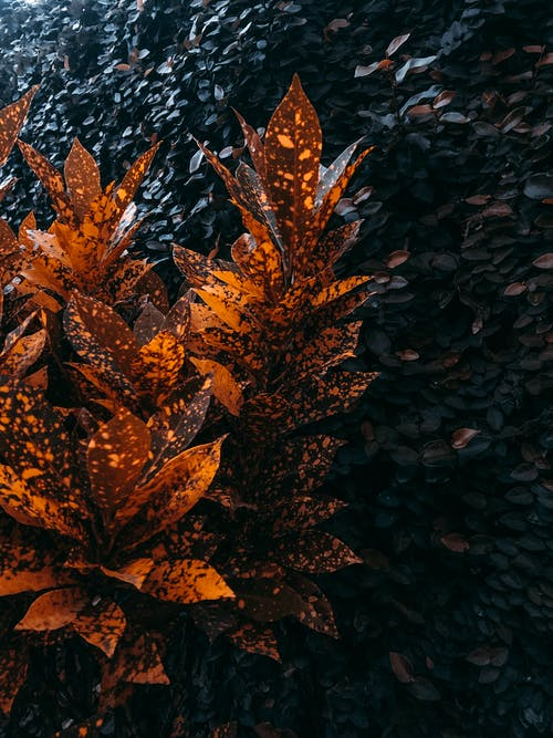 Foto stok gratis bagus, cantik, Daun-daun, dedaunan