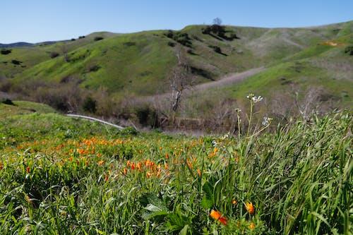 Ảnh lưu trữ miễn phí về những ngọn đồi xanh, đi bộ đường dài, đồi, đồi anh túc