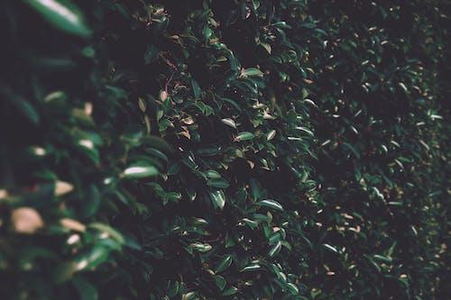 Základová fotografie zdarma na téma barva, flóra, listy, rostlina