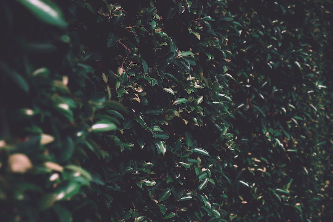 візерунок, дерево, завод