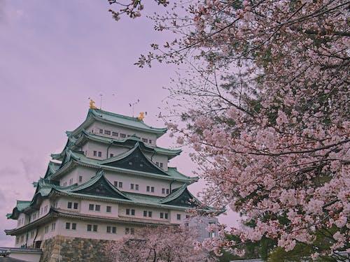 Ilmainen kuvapankkikuva tunnisteilla aasialainen arkkitehtuuri, arkkitehtuuri, historiallinen, japani