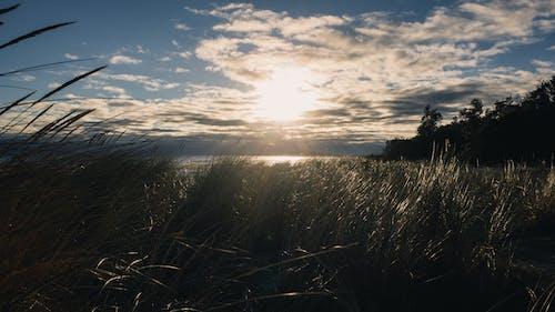 구름, 낮, 야외, 잔디의 무료 스톡 사진