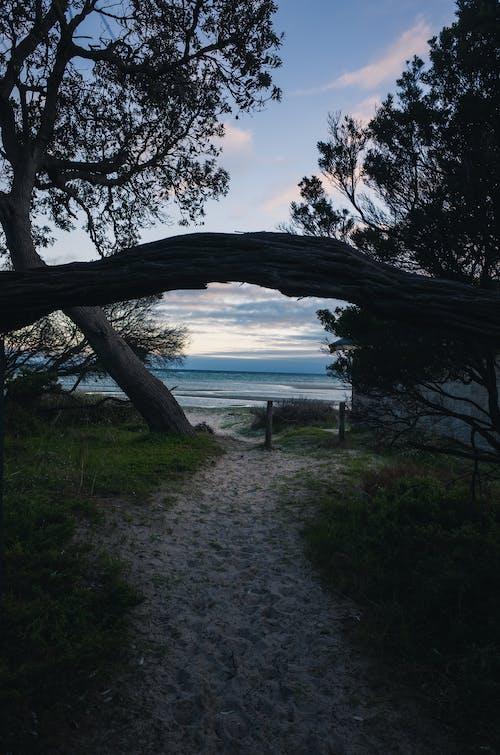 길, 녹색, 모래, 물의 무료 스톡 사진