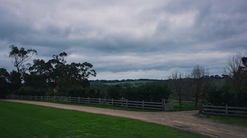 게이트, 길, 녹색, 농장의 무료 스톡 사진