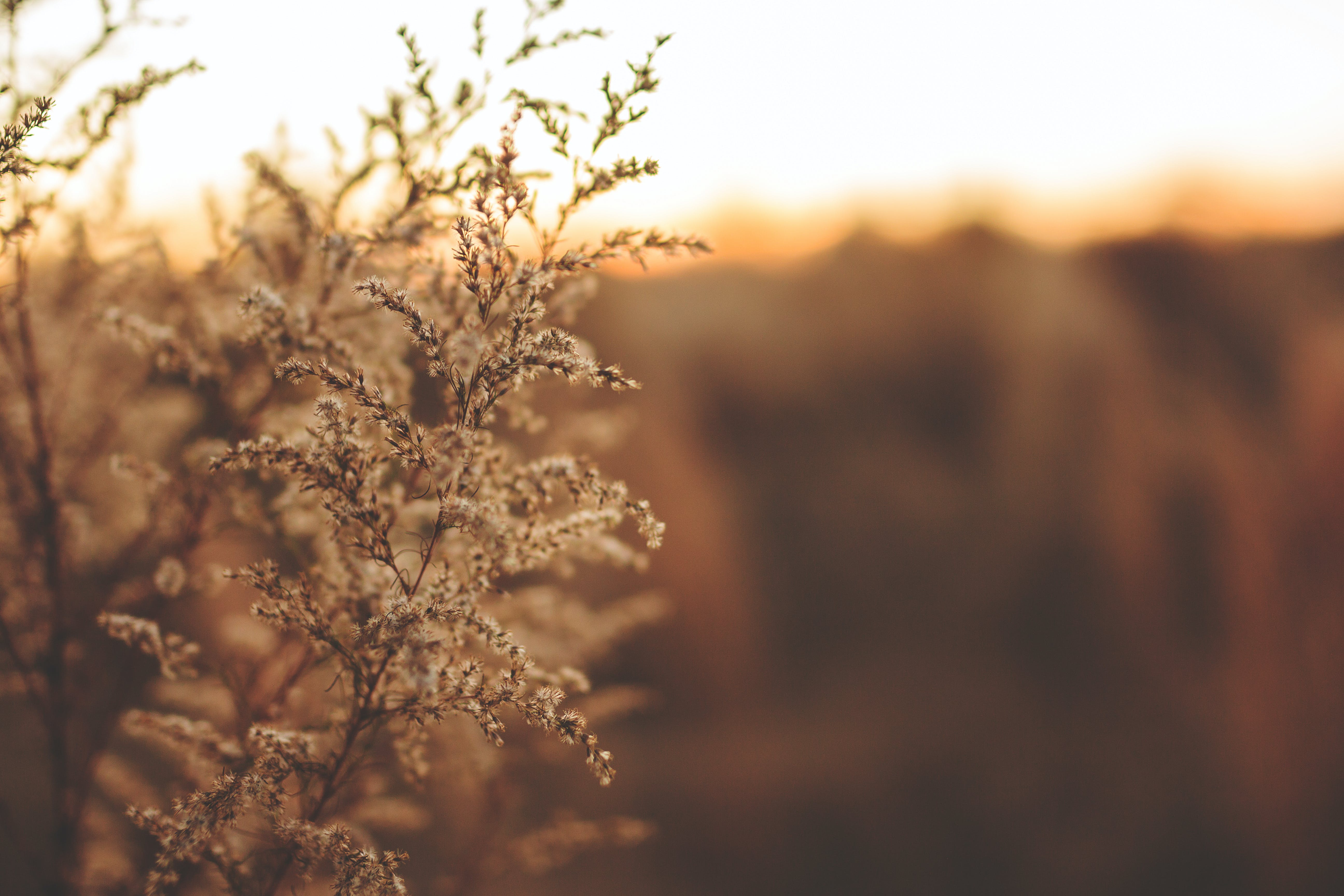 Free stock photo of light, nature, field, grass