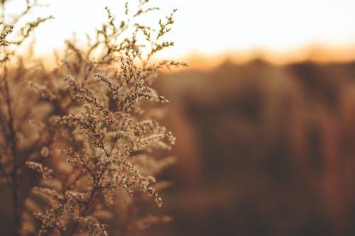 Fotobanka sbezplatnými fotkami na tému detailný záber, hracie pole, ľahký, príroda