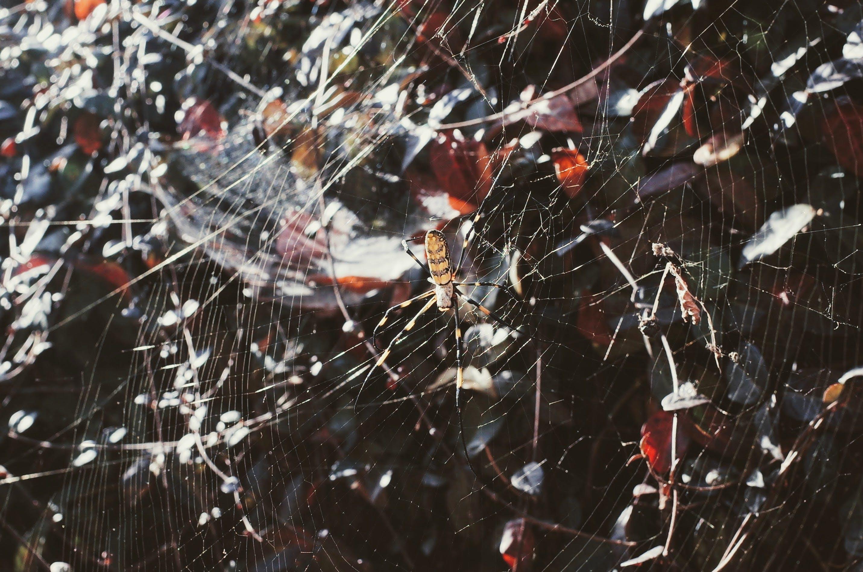 Kostenloses Stock Foto zu abstrakt, design, falle, insekt
