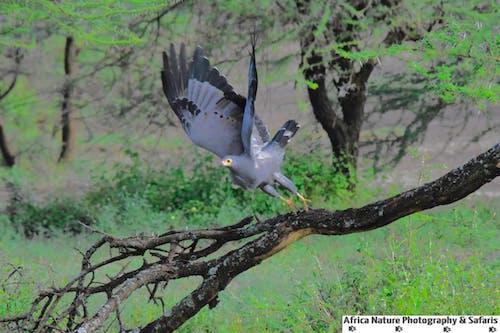 Kostnadsfri bild av tanzania fåglar expeditioner