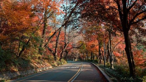 Free stock photo of autumn, foliage, leaves, nature