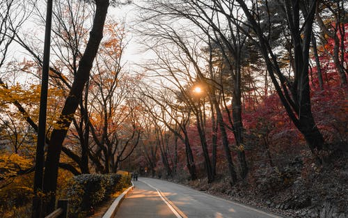 Free stock photo of autumn foliage, autumn leaves, autumn mood forest, colors of autumn