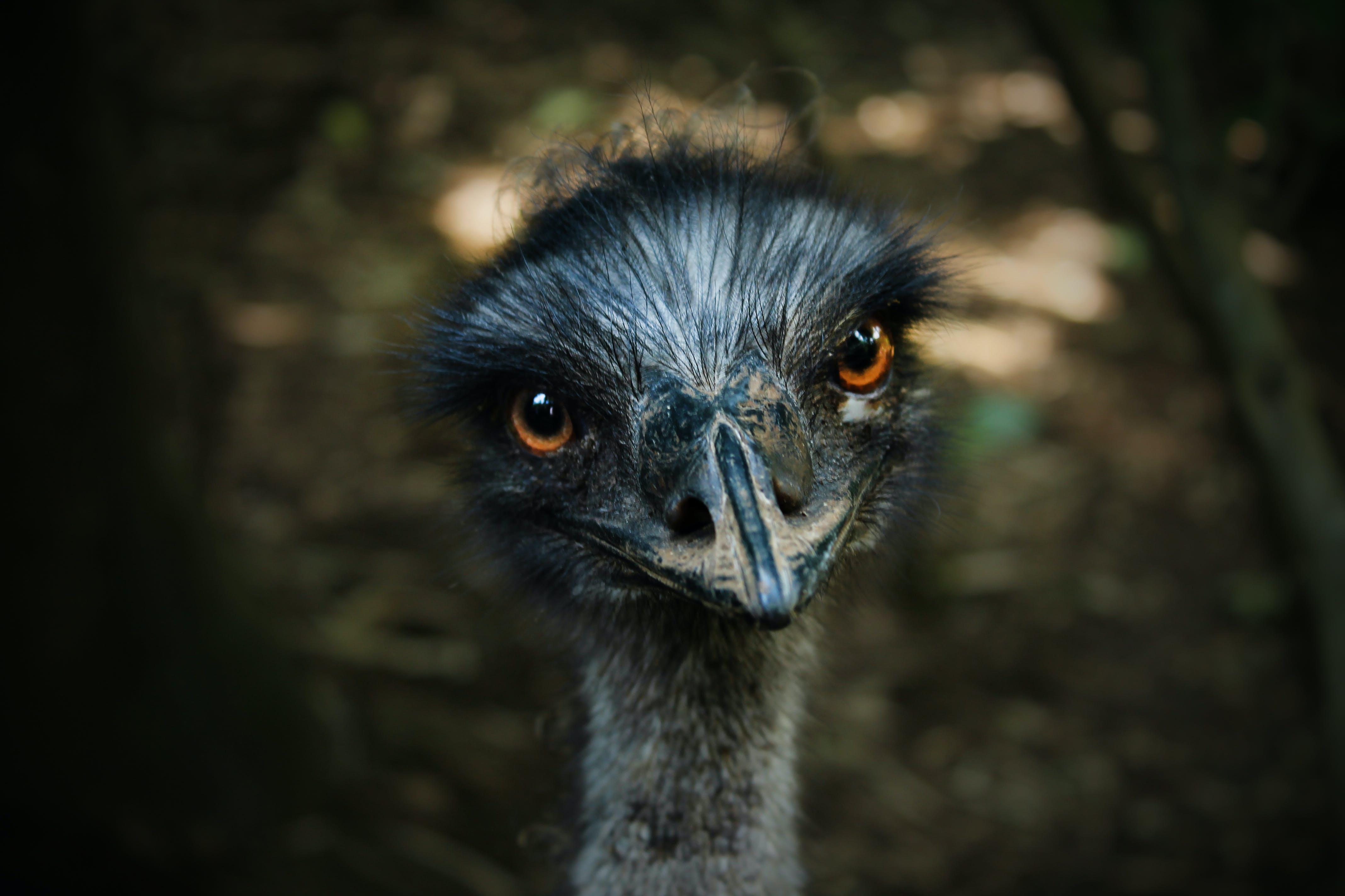 Free stock photo of bird, animal, cute, zoo