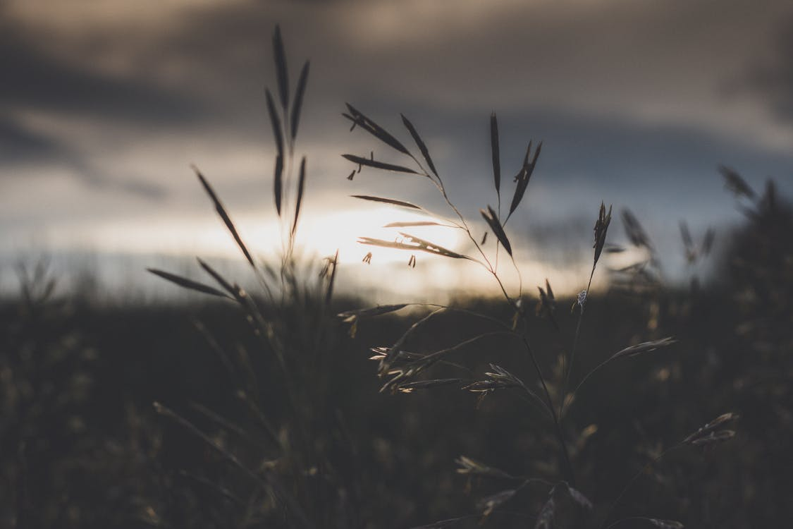 Kostenloses Stock Foto zu natur, sonnenuntergang