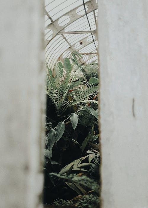 คลังภาพถ่ายฟรี ของ พืช, สวน, เรือนกระจก