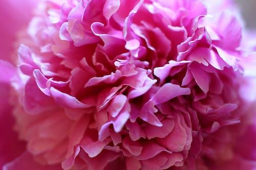 Fotobanka sbezplatnými fotkami na tému červená, farba, farebný obraz, krásny kvet