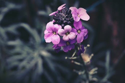 Purple Petaled Flowers In Selective Focus Photography