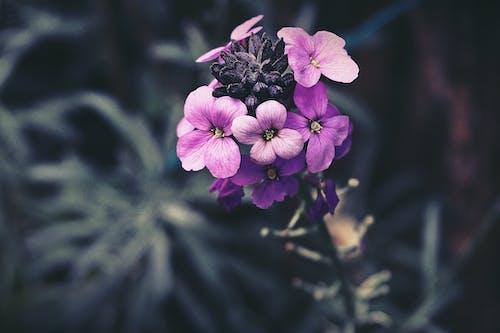 Безкоштовне стокове фото на тему «завод, квіти, квітка, макрофотографія»