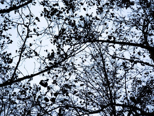 Free stock photo of branches, contrast, dark