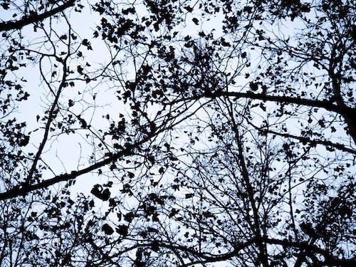 Immagine gratuita di alberi, albero, cattivo, cielo