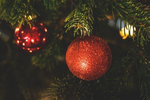 Foto profissional grátis de abeto, árvore, árvore de Natal, baile