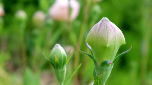 balon çiçek içeren Ücretsiz stok fotoğraf