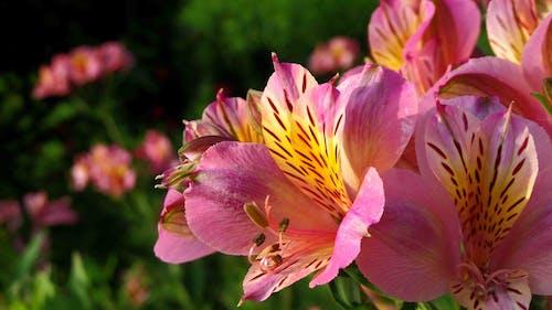 sarı aster çiçeği içeren Ücretsiz stok fotoğraf