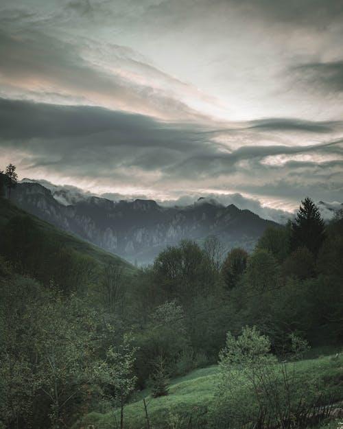 açık hava, ağaçlar, bereketli, bulutlu gökyüzü içeren Ücretsiz stok fotoğraf