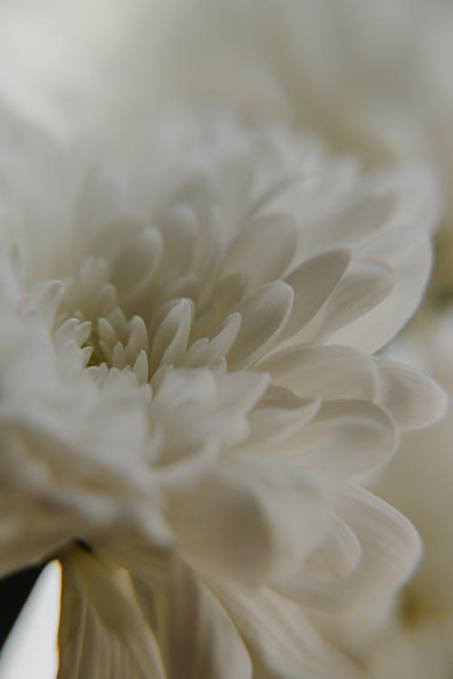Foto d'estoc gratuïta de flors, fons, natura