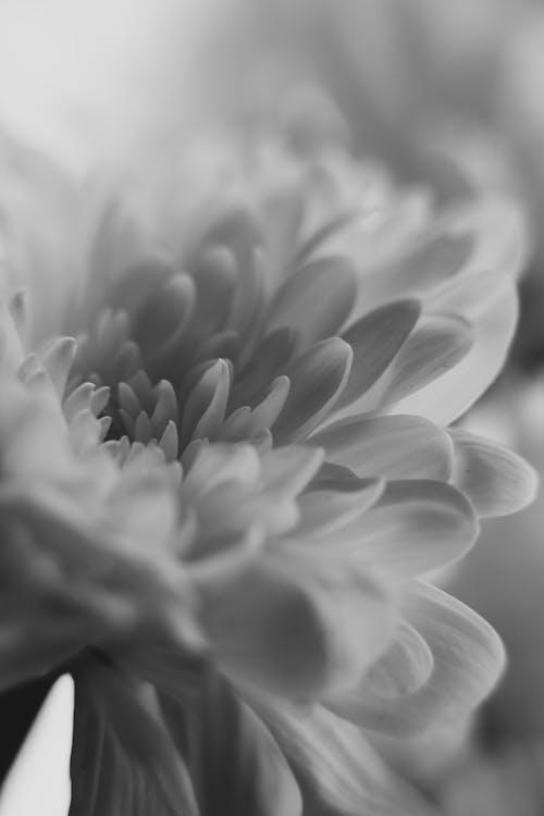 Foto d'estoc gratuïta de bw, flors, fons, natura