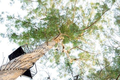 Kostnadsfri bild av grenar, gröna löv, klättrande, skönhet i naturen