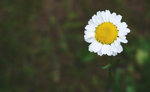 Ilmainen kuvapankkikuva tunnisteilla kasvikunta, kasvit, kukat, kukikas