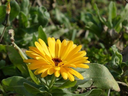 Free stock photo of botanique, été, fleur