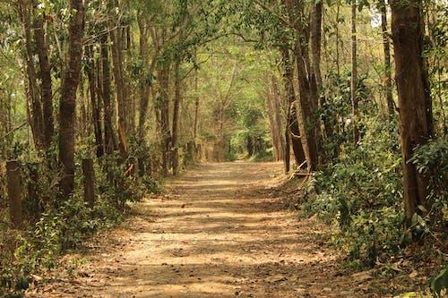 Ingyenes stockfotó erdei ösvény, erdészet, erdő, erdőborítás témában