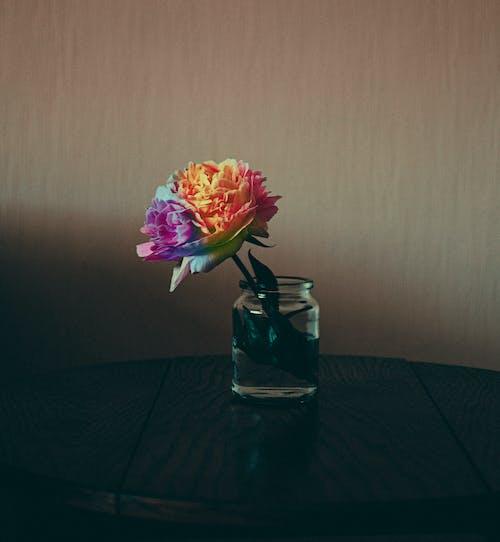 Fotos de stock gratuitas de agua, arco iris, Arte, bote de cristal
