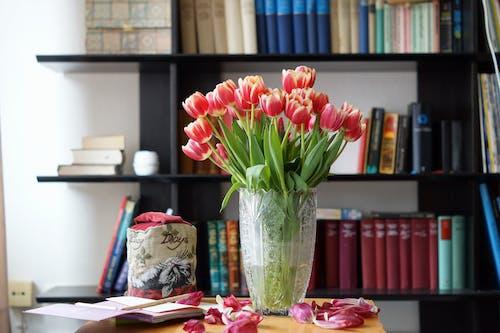 Free stock photo of books, bookshelf, red tulips, still life