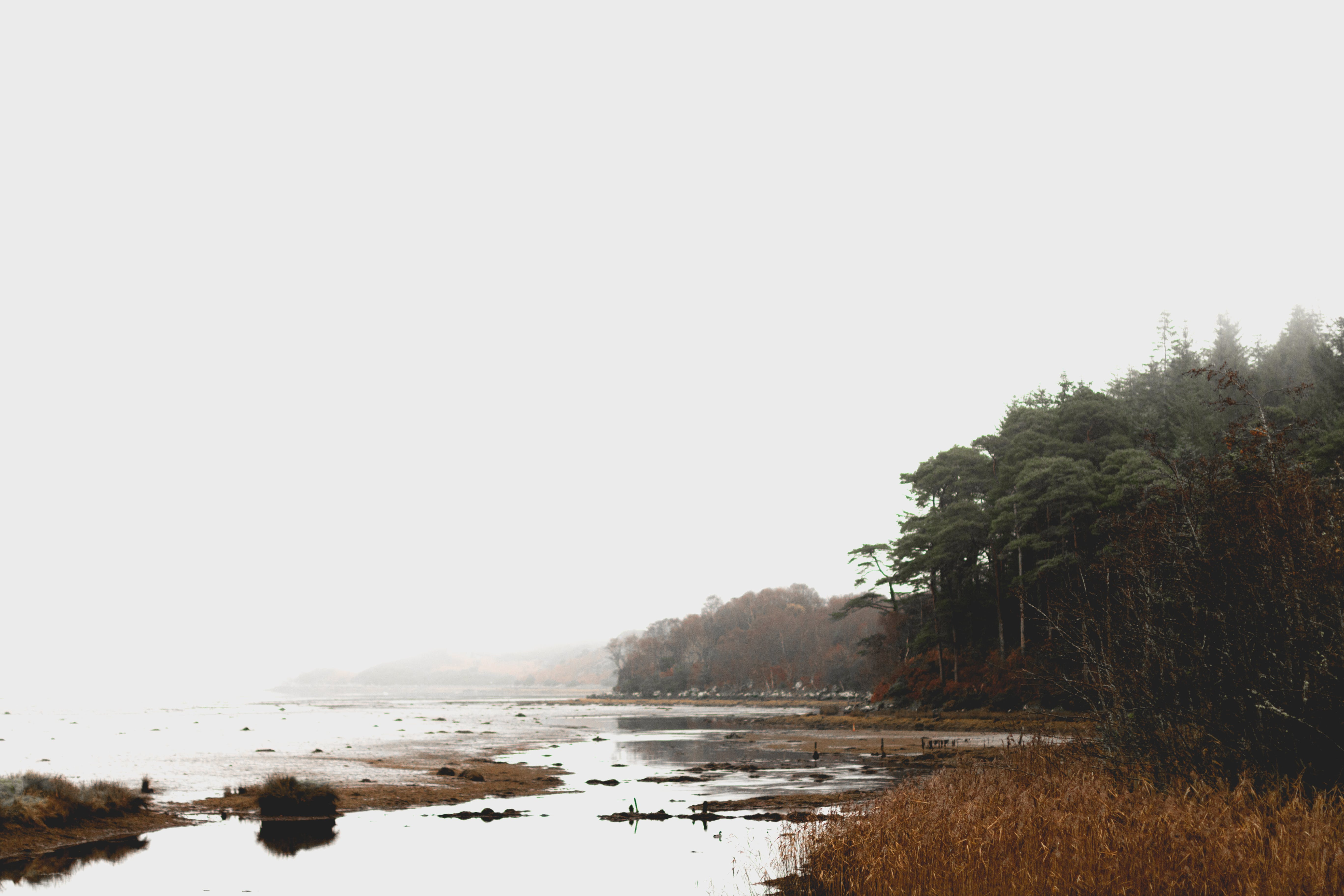 Free stock photo of coast, desaturated, forest, ireland