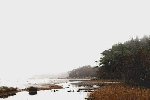 Fotos de stock gratuitas de agua, arboles, blanco, bosque
