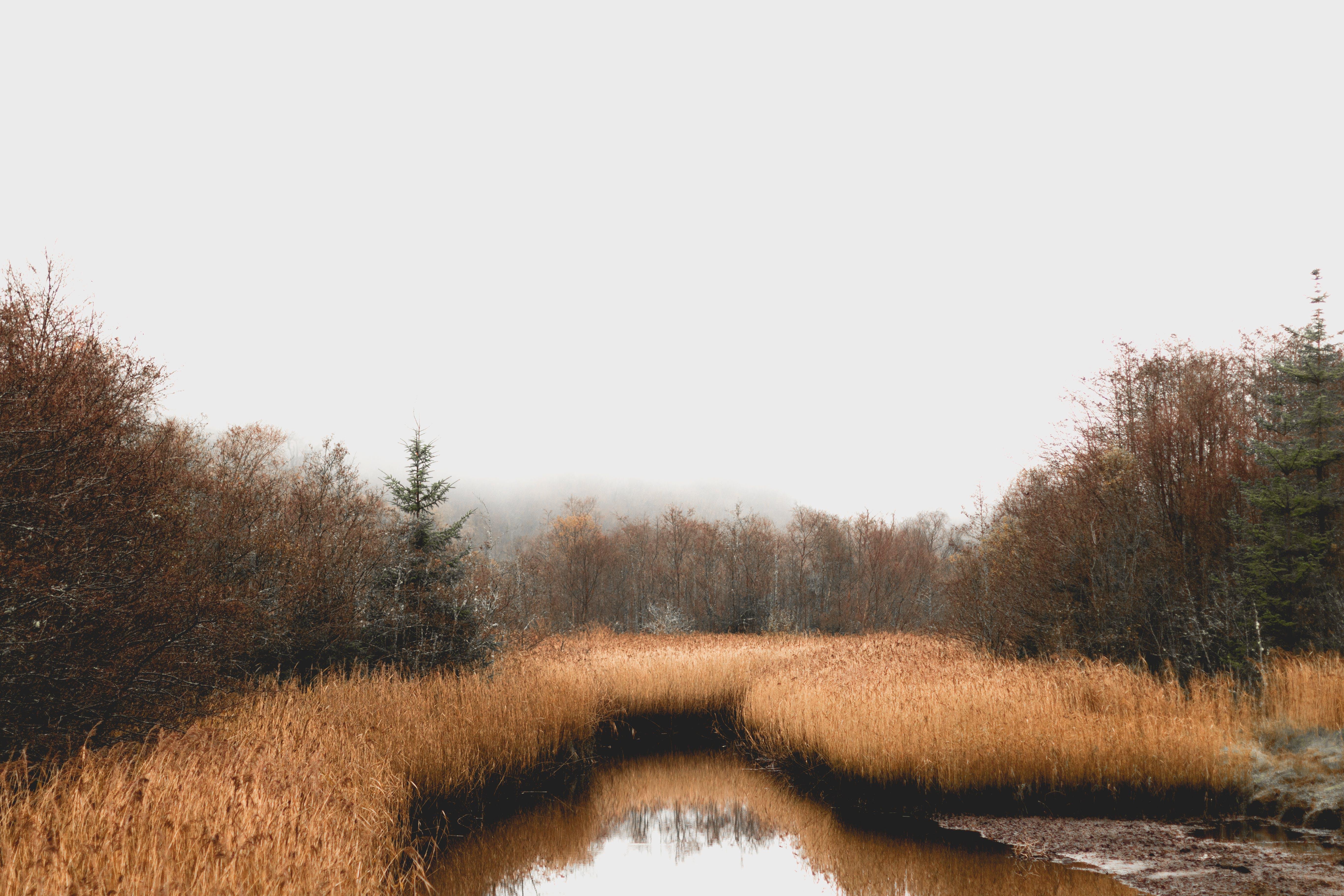 Foto d'estoc gratuïta de aigua, arbres, bog, bosc