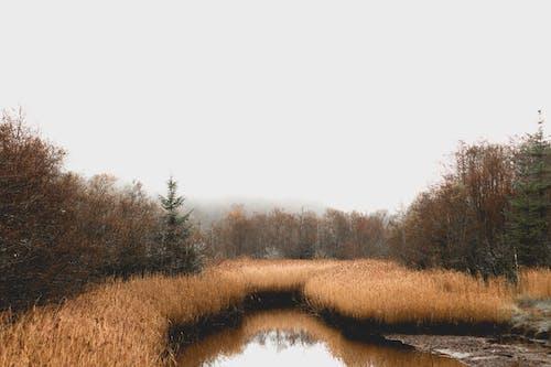 Kostnadsfri bild av irland, kärr, mosse, skog