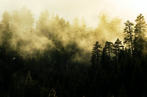 Photo of Tall Trees Covered With Fog