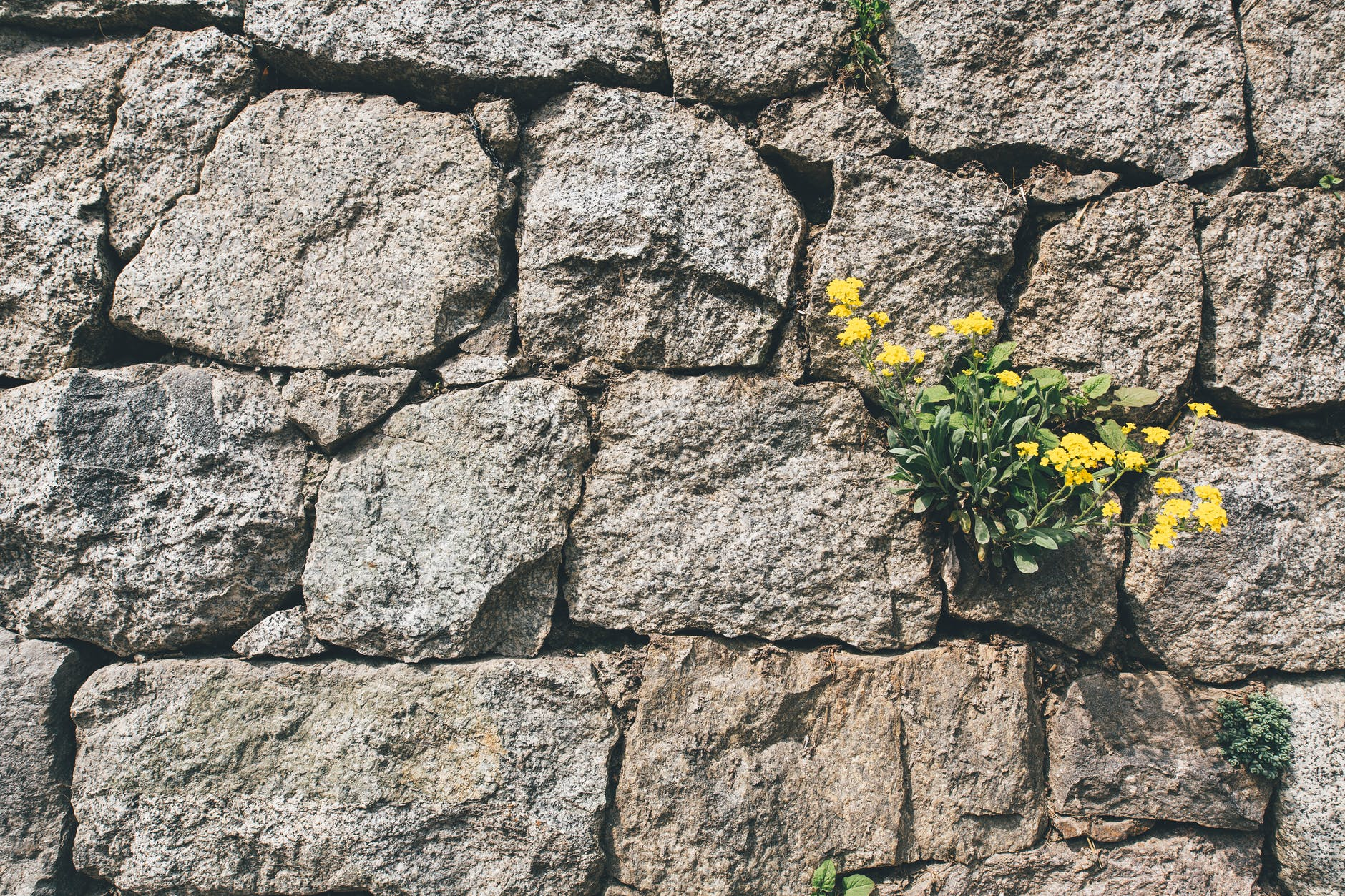 stone wall with yellow flowers