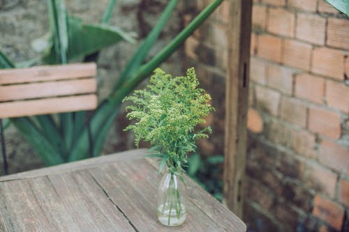 Free stock photo of table, tree
