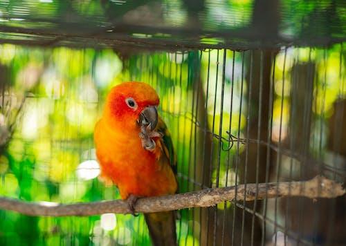 Gratis lagerfoto af papegøje